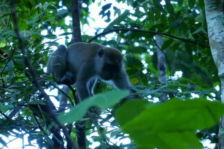un singe dans un parc