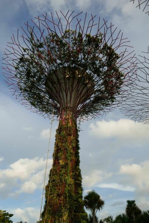 un super tree