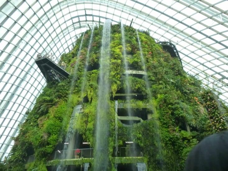 Une montagne de plantes