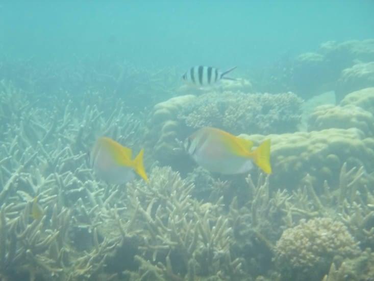 Plein de poissons