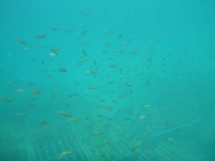 plein plein de poissons...!