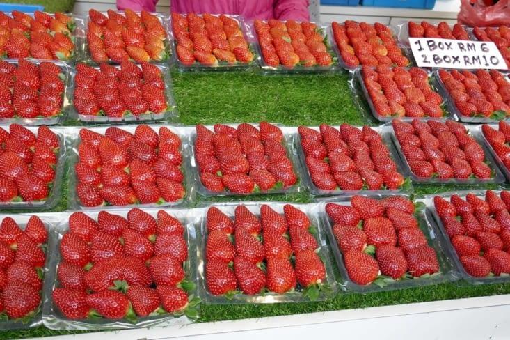 des fraises sous toutes les formes : natures