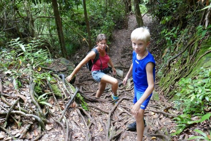 marche dans la jungle