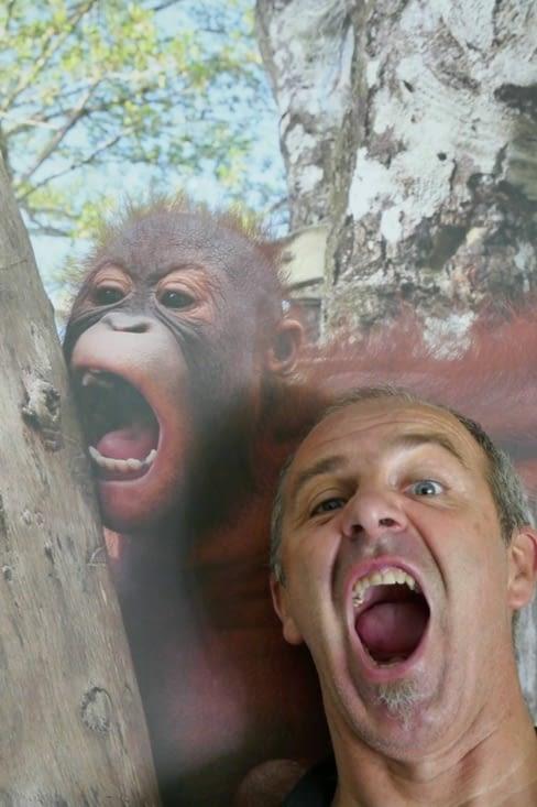 La planète des singes: qui descend de qui ?