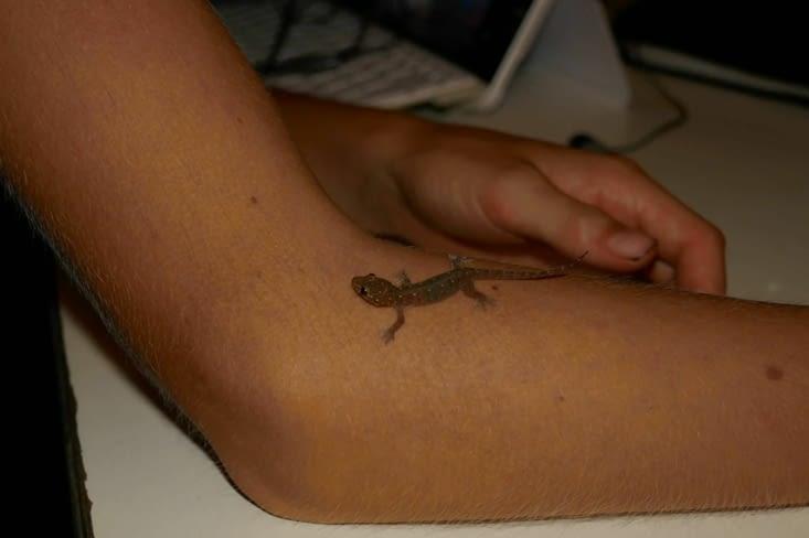 Maël brave la nature avec un gekko (lézard)