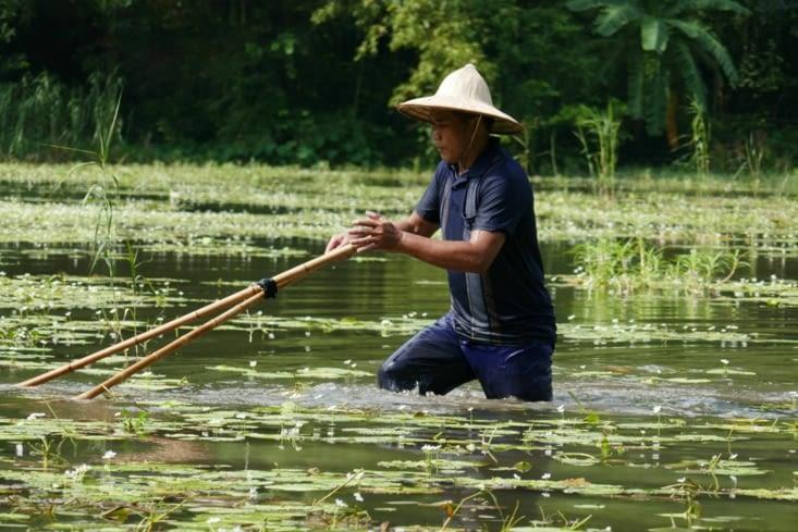 Travail dans les champs d'eau