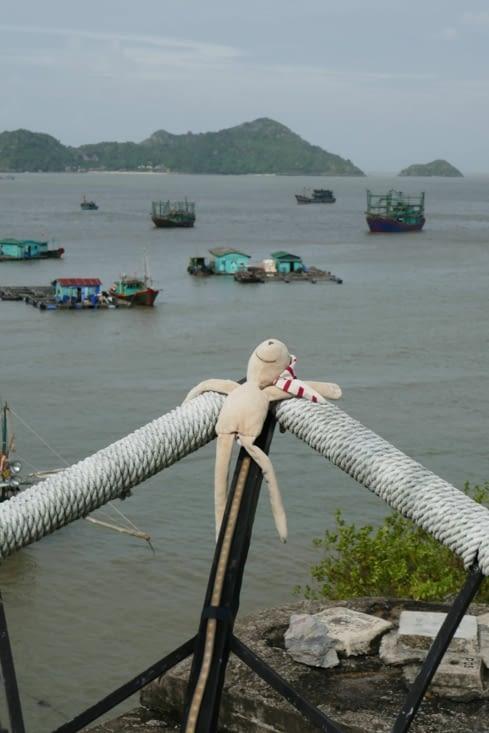doudou a survécu au typhon