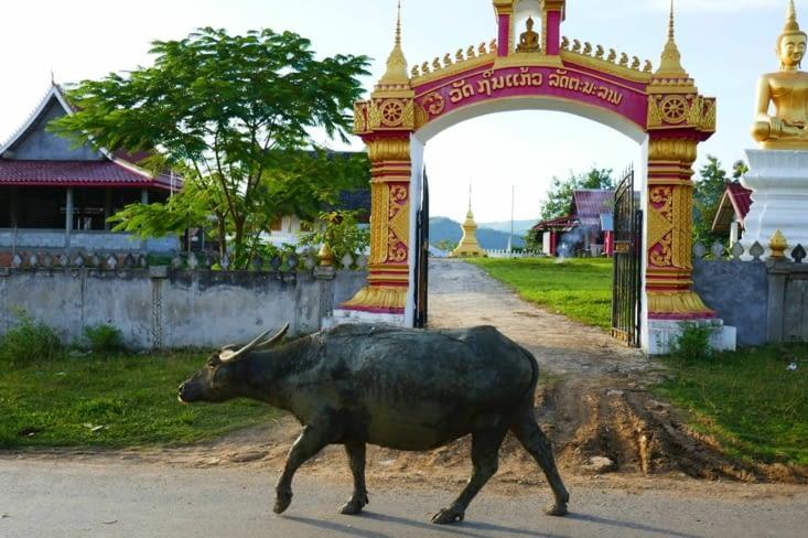 Visite d'un temple sur la route