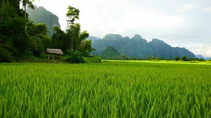 Allez un peu de rizières pour la route