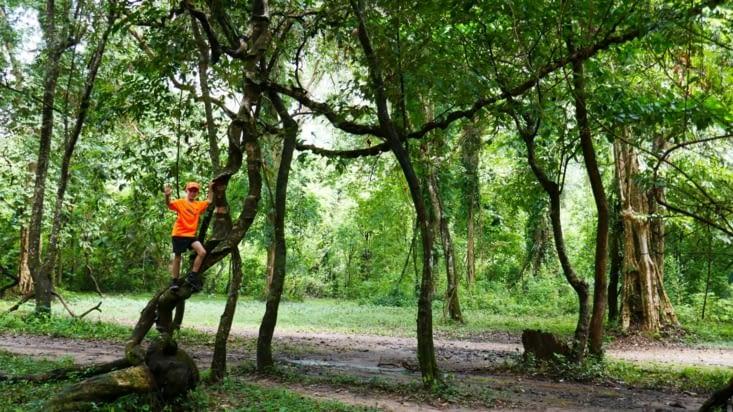 Le parc...avec son petit singe orange