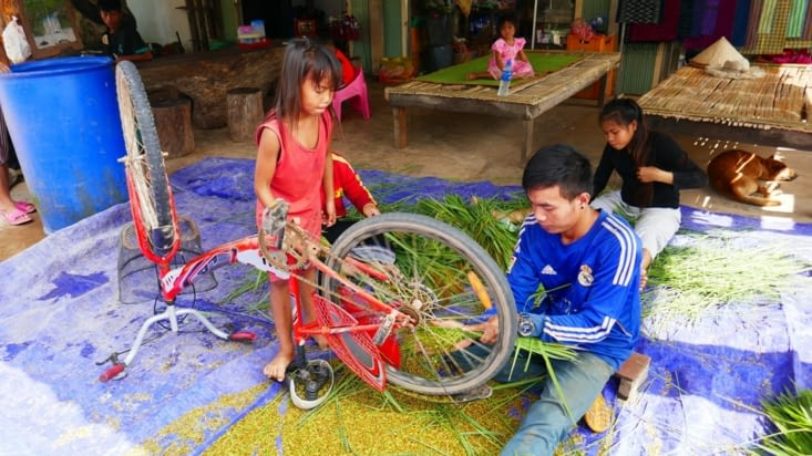 Séparation des grains de riz de la tige