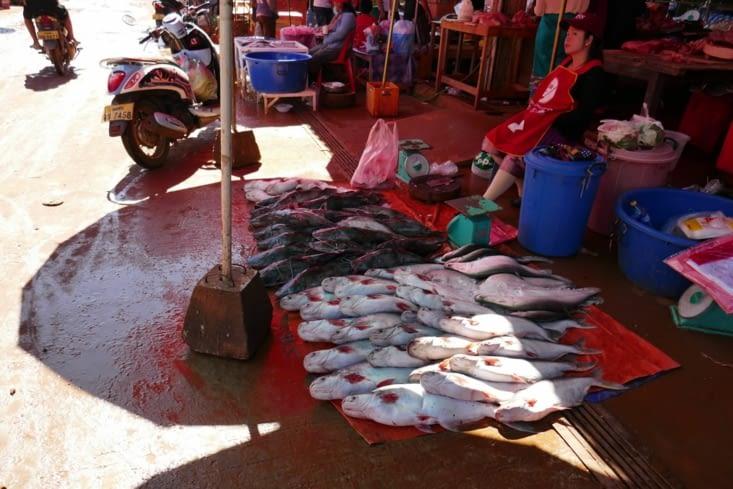 Les poissons qui sèchent à la poussière et au gaz d'échappement