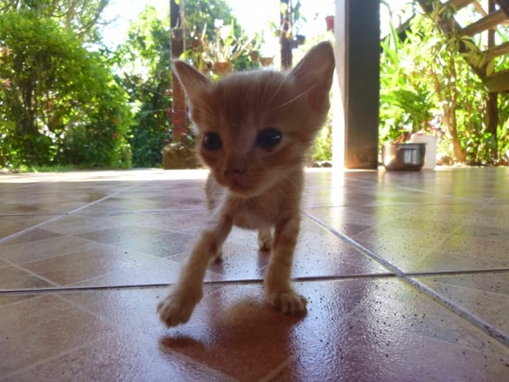 Au Laos, il y a plein de chats, celui là je l'ai appelé boule de poils
