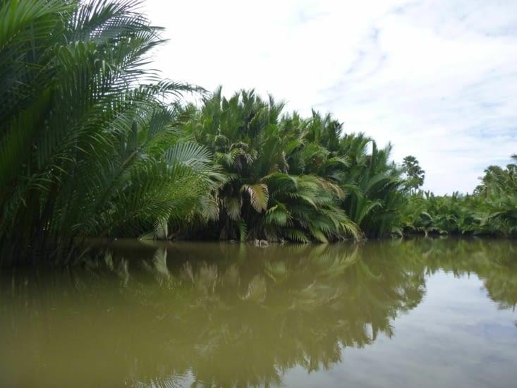 Des fois tu te demandes si un croco ne pourrait pas sortir de cette mangrove...