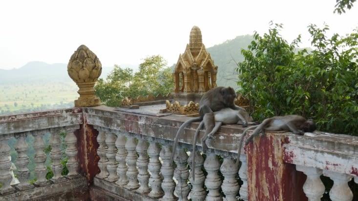 Ça a l'air d'être cool le job de singe ici