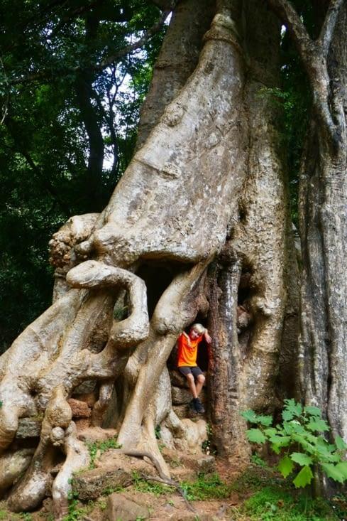 C'est pas un arbre de Mickey ça !