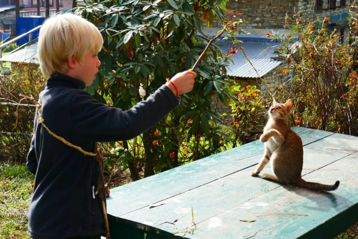 Maël joue avec un chat népalais qui curieusement aime le même jeu que Vanille notre chatte