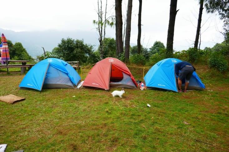 Maël préfère que nous dormions sous tente. En plus il y a des copains lapin (pas crétins)