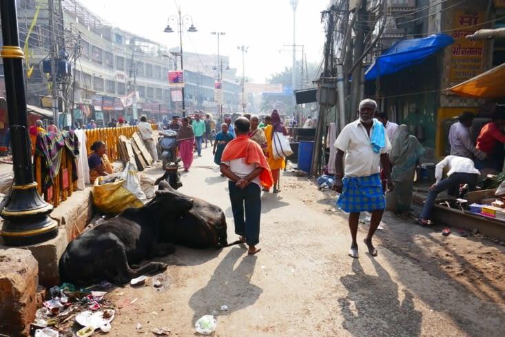 il y a bien sur les vaches, partout, dans les rues, les ruelles....
