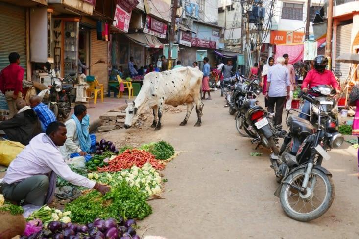 les vaches au milieu du marché