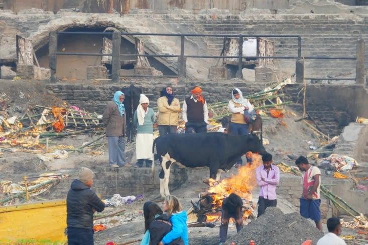 Les vaches supervisent les opérations