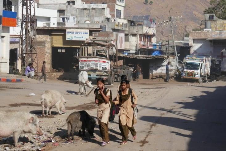 Et voilà les cochons indiens ( plus dans le parc mais dans la rue ! )