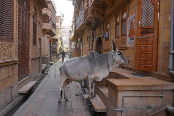 Même les vaches font l'aumône dans les maisons