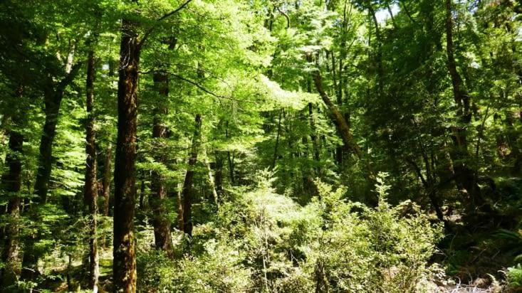 Bref tout est beau même les arbres