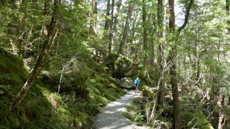 De  belles forêts