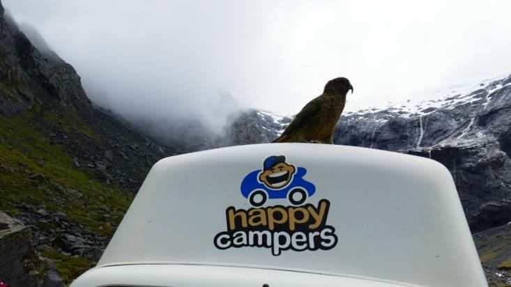 ALFRED notre camper van est fier comme un bar tabac avec tous ces perroquets sur lui !