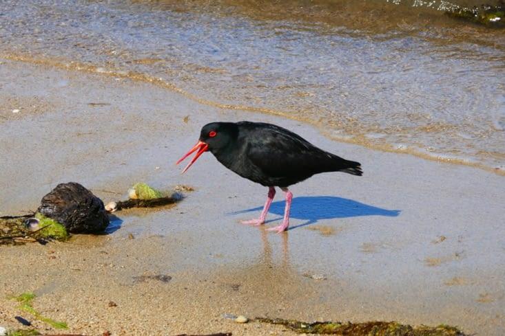 Un drôle d'oiseau un peu rond et un bec rouge très long et fin