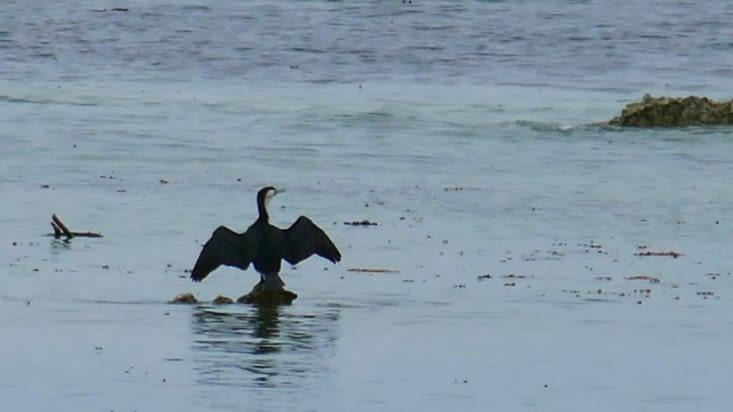 Non ce n'est pas un oiseau se débattant dans la marée noire; il se détend,  c'est tout. .!