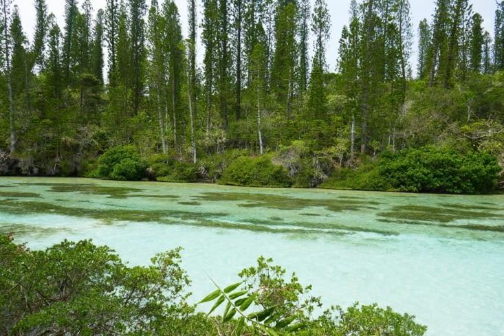 La rivière,  tout de vert vêtue, est superbe