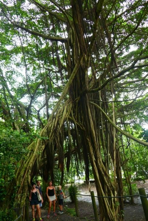 Nous avons trouvé l'arbre d'avatar.
