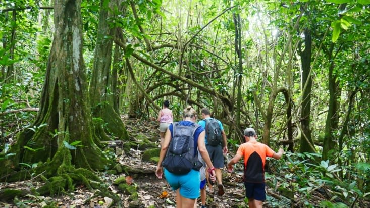Balade dans la jungle.... on prend la route des ananas et le chemin des ancètres