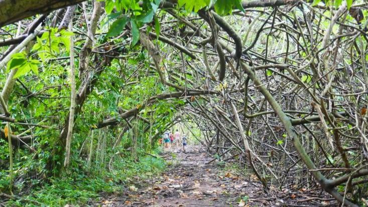 Un tunnel de végétation