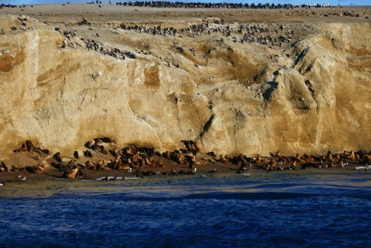 et des lions de mer en bas