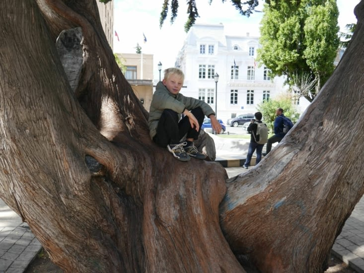 un arbre orné d'un viking en son milieu