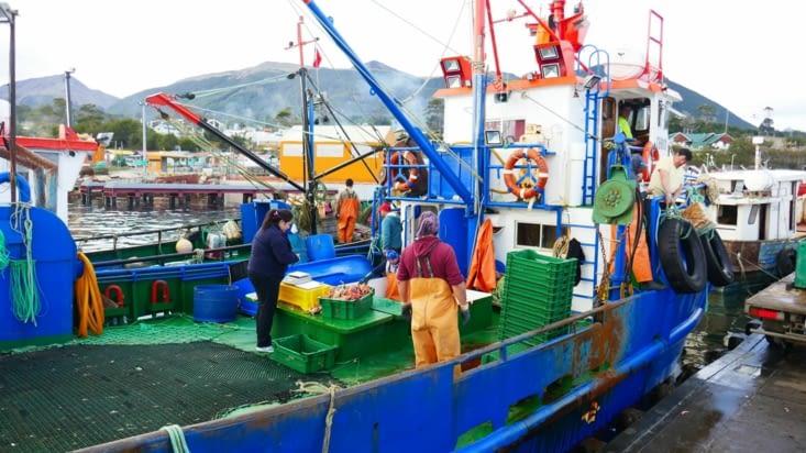 Les bateaux reviennent de la pêche aux crabes