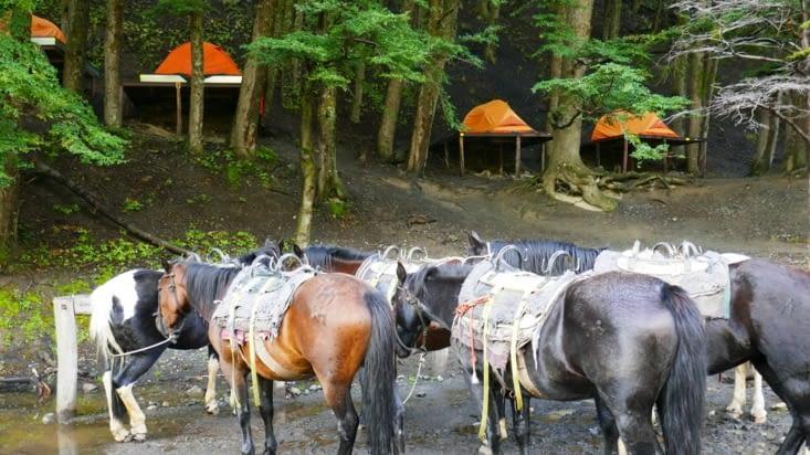 Voici un camping dans le parc