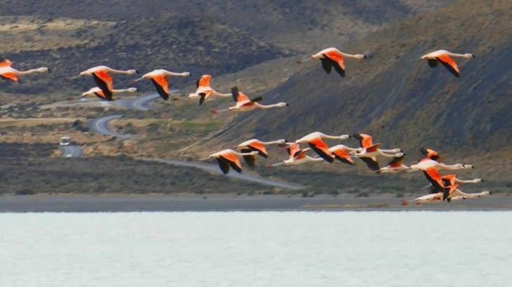 vol de flamands roses au dessus de nous
