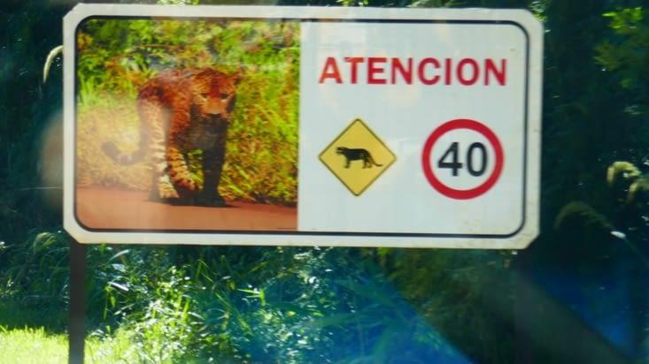 Moi, devant un léopard, je ralentis si je suis en voiture et j'accélère si je suis à pied