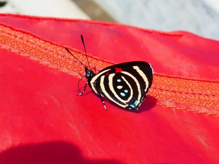 Un joli papillon est tombé amoureux du sac à dos rouge de Soiz