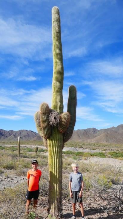Balèze le cactus, non ?