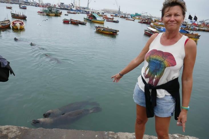 Une panthère parmi des lions de mer: du jamais vu !!!!