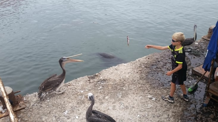 Notre viking se fait des amis en leur lançant des sardines que les pêcheurs lui donnent.