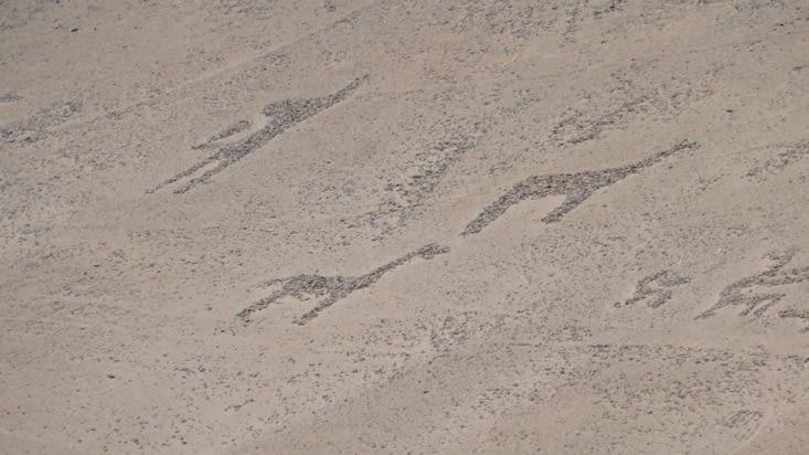 Ici des lamas sont représentés
