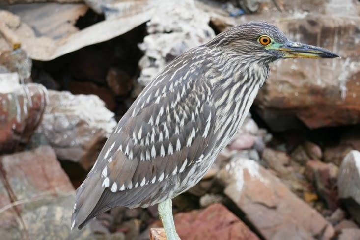d'autres oiseaux trouvent la scène très intéressante. ...
