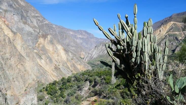 Nous marchons le long du canyon dans le quel il y a environ 40 variétés de cactus