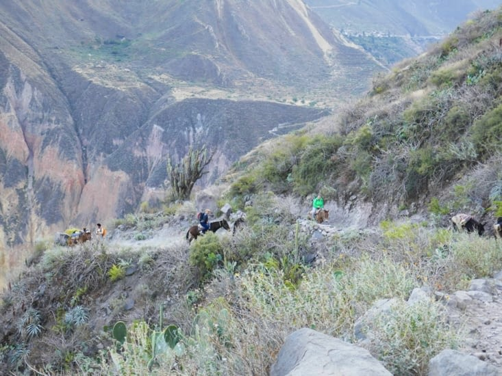2 filles russes qui avaient des difficultés à  marcher, sont montées à dos de mules